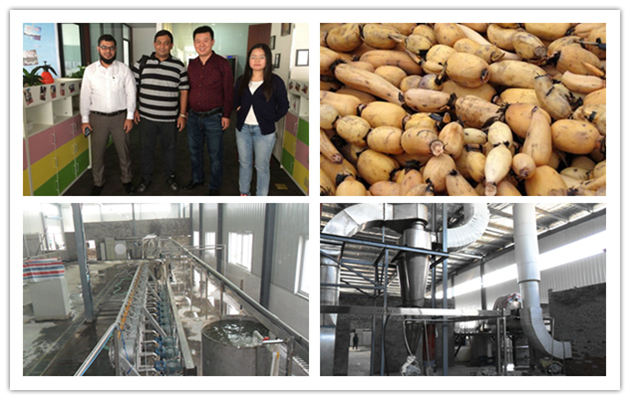 Lotus Root Starch Production Ma